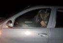 """Policia """"hyn në gjynah"""" ndërpret çiftin që ishte duke e bërë në makinë"""